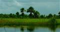 Demerara River, Guyana