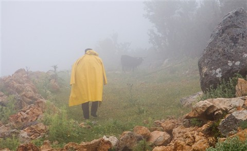 Walk In The Fog