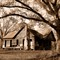 sepia housetree_edited-2