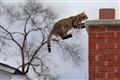 Jumping Tigger
