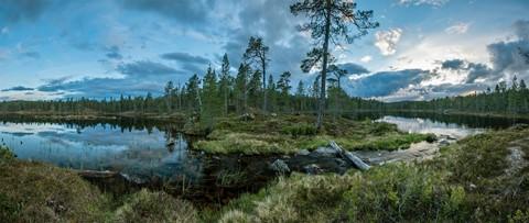 Wilderness scene