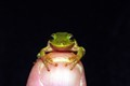 Frog On My Thumb
