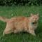 Cat in Frankfort, Kentucky