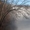 Bending Trees over the Clarion River No1 (D700)