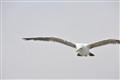 original free bird