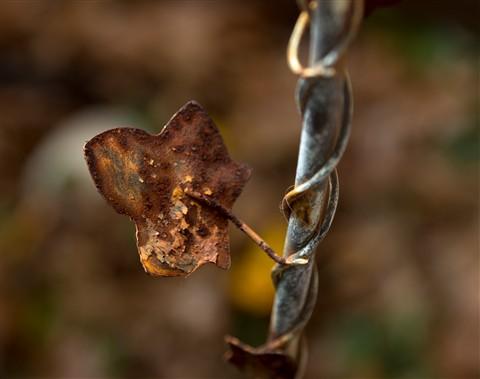 Rusty_Leaf_2
