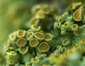 A Strange lichen Landscape.