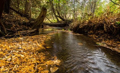1210 - Humber Creek - 024