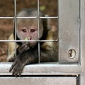 Sad and lonely in the Zoo