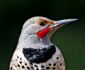 Flicker Portrait_6016