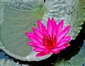 Lotus-SBS1