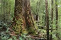 Tahune Forest