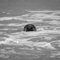 Seal of Norfolk coast