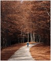 The old Road to Poiana Brasov mountain resort in Romania is now a popular walking route