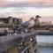 lovebirds_in_dublin