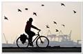 Bike & Birds