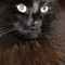 Ann's cat-001