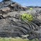 Lava wrinkles at Kilauea Coast