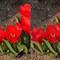 PhotOptimist x10 deoverblown reds 0063 A-B