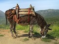 Dressed Donkey