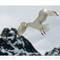 Nature - Avian