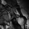 reynisfjara-cave_42083859815_o