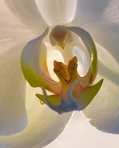 orchid1_4web