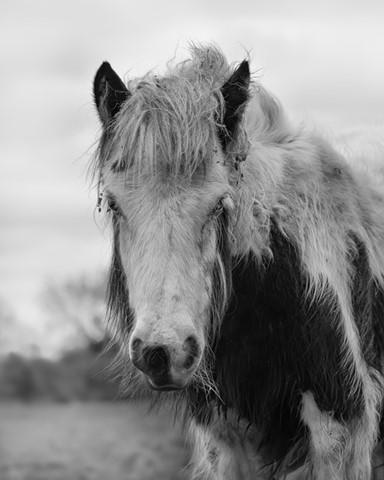 Black-White Horse 2 NIK efx edit-2