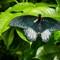 Butterfly 05