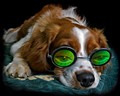Albey is 7 months old and is resting after a good walk. He is wearing a pair of green 3D holographic glasses.  The photo has not been messed around with. Nothing has been added or taken away. This is exactly how he looked :-) .