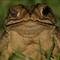 toad_crop