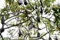 Bats for Hire