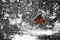 Lone Birdhouse