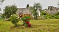 Image taken in Valpolicella near Negrar, Verona province.