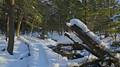 Roaring Brook Boardwalk winter snow