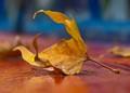 leaf-DSC09763-LR