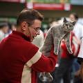 Cat championship