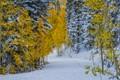 The Seasons Blend