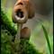 _RAK0680-28: OLYMPUS DIGITAL CAMERA