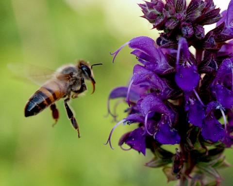 Bee 2 090509-1