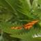 Santa Barbara Butterflies 961