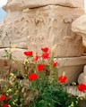 Red poppies and column capitals