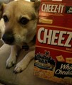 Gone to Cheez-It Heaven
