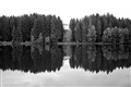 Black-Lake Trees