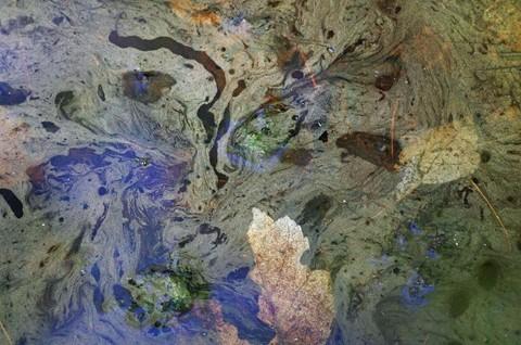 zPOSTEDIMGP3882 aug 2013 ravenswood