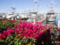 Sunny Fall Afternoon at Channel Island Harbor