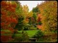 Arboretum de la Sedelle, Crozant, France (17).