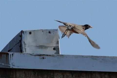 Oiseaux du dimanche matin 844