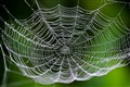 a nice spider web