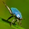 Iridescent Bug.